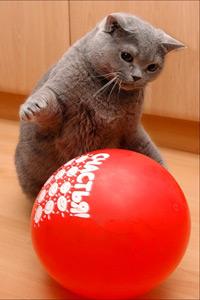 Аватар вконтакте Серый кот с красным шаром