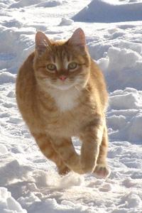 кошки, снег аватары вконтакте, скачать ...: 99px.ru/avatari_vkontakte/tags/koshki/sneg