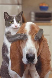 Аватар вконтакте Кот закрывает глаза собаке