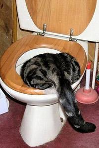 Обои Кот в туалете