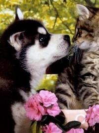 Аватар вконтакте Друба между щенком и котенком