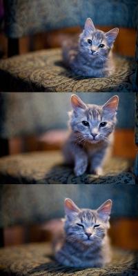Обои Котик на стуле