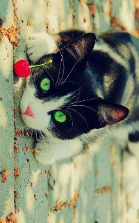 Аватар вконтакте Кошка лежит возле вишни