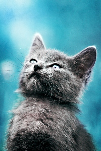 Аватар вконтакте Котенок на голубом фоне
