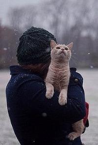 Аватар вконтакте Девушка с котом под снегом