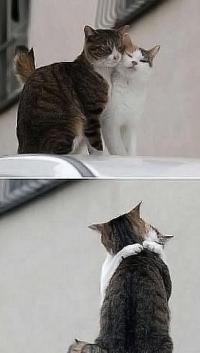 Аватар вконтакте Кошачья любовь