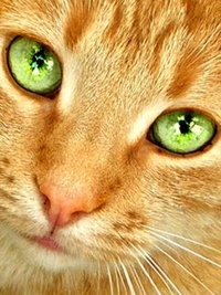 Аватарки с рыжим котом