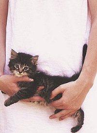 Аватар вконтакте Девушка держит в руках котенка
