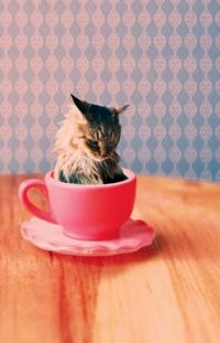 Аватар вконтакте Кот в розовой кружке