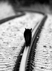 Обои Черный кот идет по рельсе