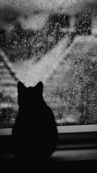 Аватар вконтакте Черный кот сидит на окне и смотрит на дождливый город