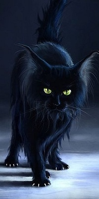 Кот чёрный вк