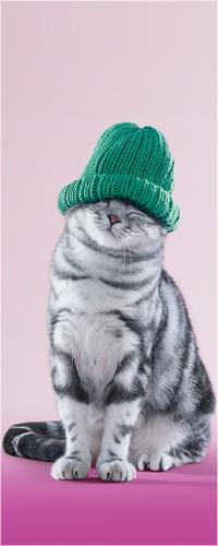 Аватар вконтакте Котик в зелёной вязанной шапочке на розовом фоне