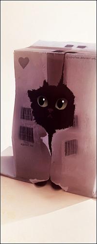 Аватар вконтакте Котик в коробке