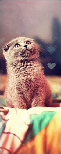 Аватар вконтакте Котёнок сидит поджав ушки и смотрит вверх