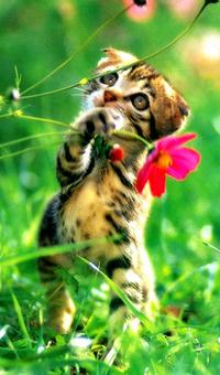 Котенок с цветком