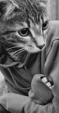 Человек с лицом кота