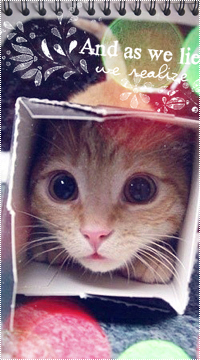 Аватар вконтакте Рыжий котёнок просунул голову в коробку (And as we lie we realize)