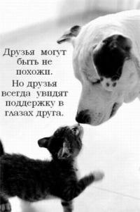 Аватар вконтакте Собака обнюхивает кошку (Друзья могут быть не похожи. Но друзья всегда увидят поддержку в глазах друга)