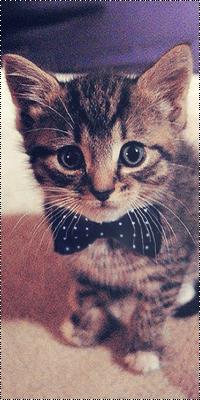 Аватар вконтакте Полосатый котёнок с чёрным галстуком-бабочкой в белую крапинку на шее