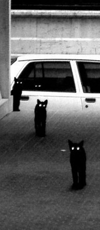Аватар вконтакте На улице стоит три черных кота со сверкающими глазами. В белом автомобиле сидит еще один.