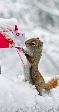 Аватар вконтакте Белка зимой достает из красного почтового ящика любовное письмо, вокруг снег