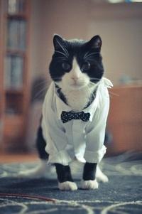 Аватар вконтакте Черно-белый кот в рубашке и галстуке-бабочке