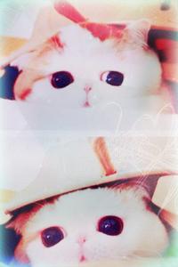Аватар вконтакте Знаменитый кот экзот Снупи / Snoopy