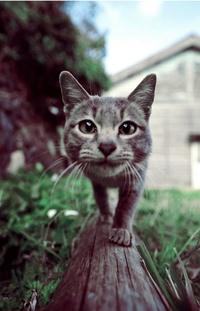 Авка коты