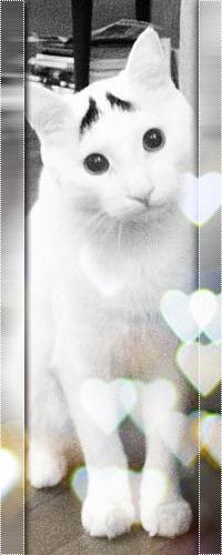 Аватар вконтакте Удивленный кот Сэм с бровями сидит среди бликов-сердечек