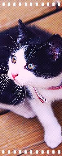 Аватар вконтакте Черно-белый котенок сидя на полу смотрит вверх в левую сторону