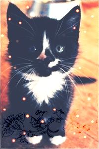 Аватар вконтакте Маленький черно-белый котенок сидит и смотрит вверх