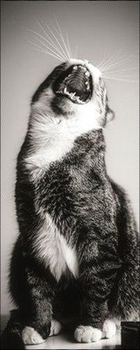 Картинки кот на аву вк