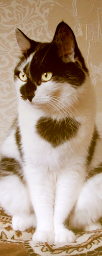 Аватар вконтакте Кошка с сердечком на груди сидит на кровати, смотря куда то в бок