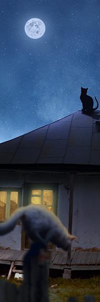 Аватар вконтакте Черный кот, сидя на крыше деревенского дома с освещенными окнами, смотрит на луну в ночном небе, а внизу белый кот пытается спрыгнуть с бревнышка в деревянном заборе, автор Garas Ionut