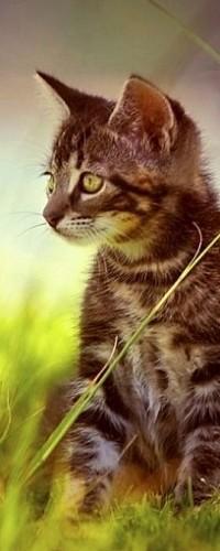 Аватар вконтакте Котенок, сидящий в траве