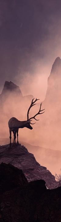 Аватар вконтакте Олень стоит на горе, фотограф Caras Ionut
