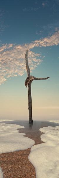 Аватар вконтакте Енот, залезший на сухой ствол дерева без веток и листьев, стоящий на песчаном морском побережье, пытается спуститься по нему вниз