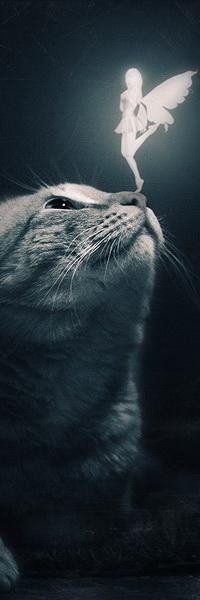 Аватар вконтакте Белый силуэт миниатюрной девушки с ангельскими крыльями, стоящей на носу серого кота