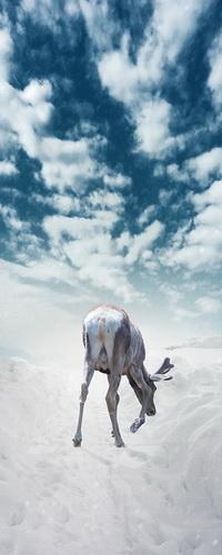 Аватар вконтакте Молодой олень ищет себе пищу среди заснеженной дорожки на фоне неба с белыми, перистыми облаками