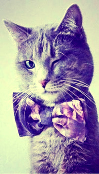 Аватар вконтакте Серый кот с бабочкой на шее прищурил один глаз