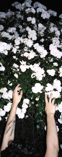 Аватар вконтакте Руки парня тянутся к белым цветам
