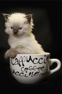 Аватар вконтакте Милый котенок сидит в кружке