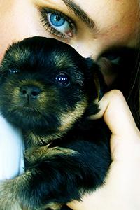 Аватар вконтакте Девушка держит в руках новорожденного щенка йокширского терьера
