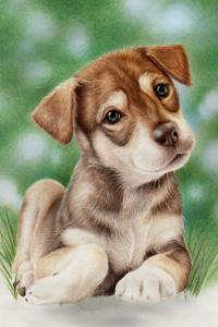 Аватар вконтакте Собака сидит в зеленой траве