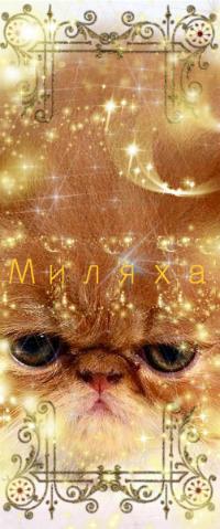 Аватар вконтакте Персидский кот / persian cat (Ми ля ха)
