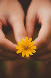 Аватар вконтакте В руках девушки желтый цветок