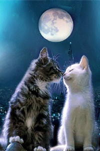 Аватар вконтакте Кот и кошечка милуются под луной
