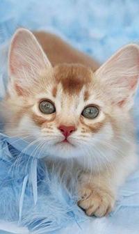 Аватар вконтакте Рыжий полосатый котенок с зелеными глазами