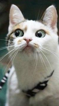 Аватар вконтакте Белый кот с широко открытыми глазами